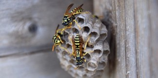Spring and Summer Bee Control Tips