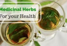 Herbs That Can Benefit Your Health